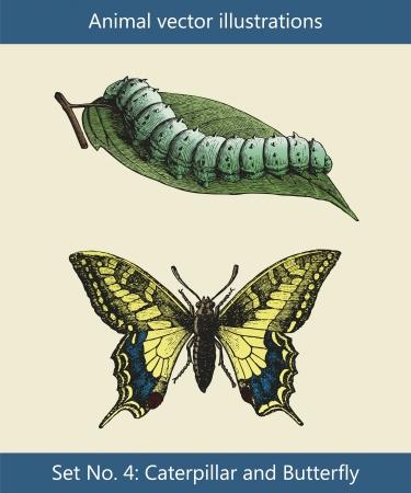 Ilustraciones vectoriales, animales oruga y la mariposa