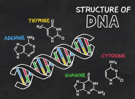 biochemistry: chemical structure of DNA on a blackboard Stock Photo