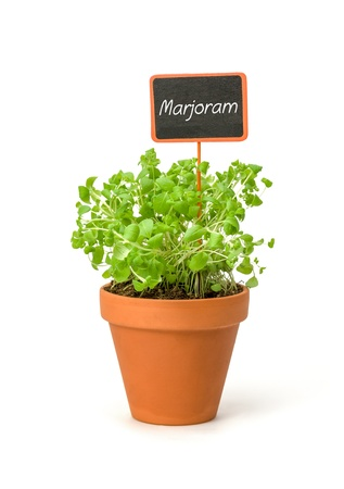 marjoram: Marjoram in a clay pot with a wooden label