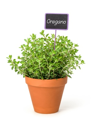 labeled: Oregano in a clay pot with a wooden label Stock Photo