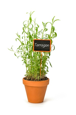 tarragon: Tarragon in a clay pot with a wooden label Stock Photo