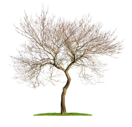 冬の分離のアーモンドの木 写真素材