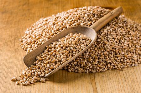 wooden scoop: Wooden scoop with wheat