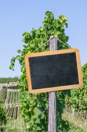 Blank blackboard in the vineyards photo