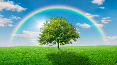rainbow scene: Oak tree on a green meadow covered by a rainbow Stock Photo