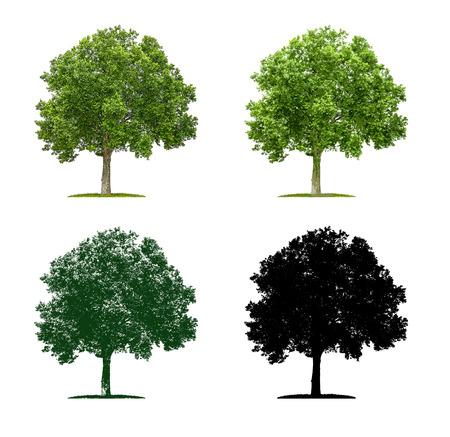 Arbre en quatre techniques d'illustration différentes - Plane Tree Banque d'images