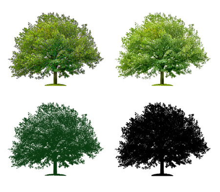 Tree in four different illustration techniques - Oak Tree Stock Photo