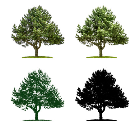 Tree in four different illustration techniques - Pine Tree Stock Photo