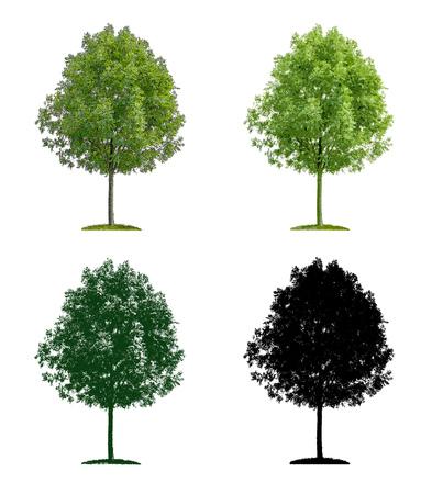 deciduous tree: Deciduous tree in four different illustration techniques