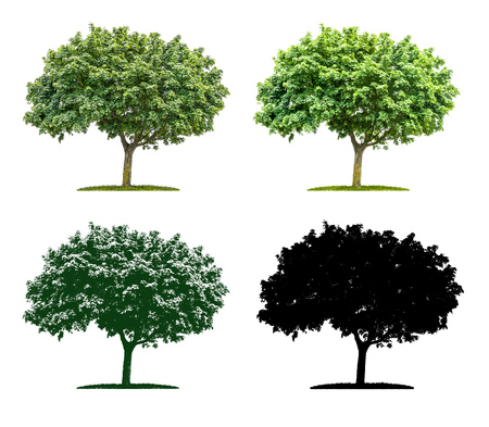 painted wood: Tree in four different illustration techniques - Maple Tree Stock Photo
