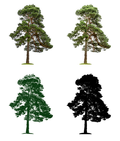 Pine tree in four different illustration techniques