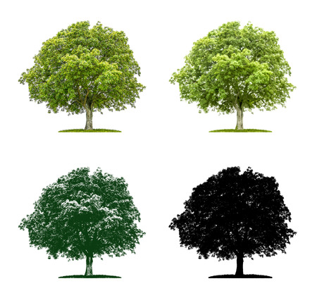 Rbol en cuatro diferentes técnicas de ilustración - Árbol de nuez Foto de archivo - 51799097