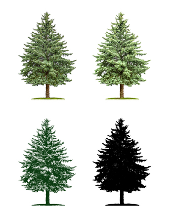 Tree in four different illustration techniques - Pine-tree Stock Photo