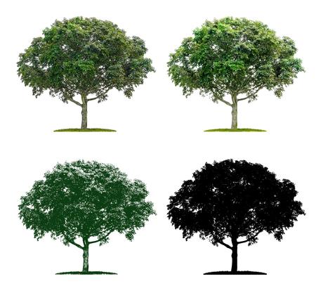 Baum in vier verschiedenen Illustrationstechniken - Ein Ahornbaum Standard-Bild
