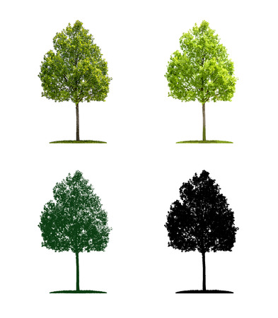 Tree in four different illustration techniques - Young oak tree Stock Photo