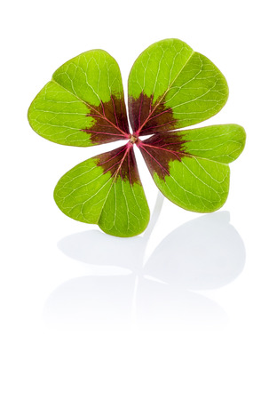 four leafed clover: Four-leaf clover on a white background