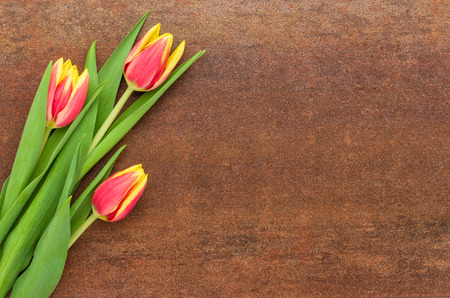 rusted background: Red Tulips on a rusted background with copy space