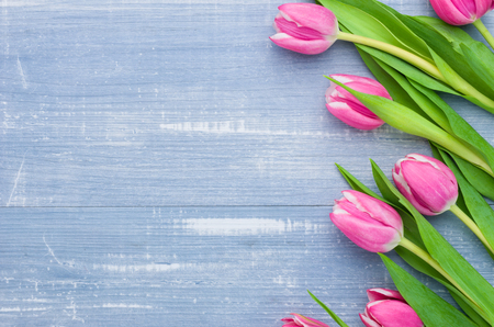 tulip: Tulips on a blue background with copyspace
