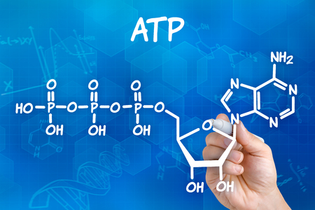 Hand with pen drawing the chemical formula of ATP