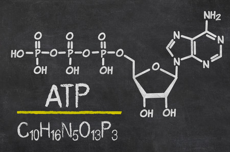 metabolism: Blackboard with the chemical formula of ATP