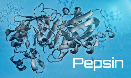 Three-dimensional model of Pepsin - 3d render