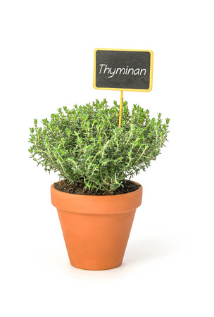 Thyme in a clay pot with a german label Thymian Stock Photo