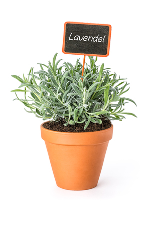 Lavender in a clay pot with a german label Lavendel