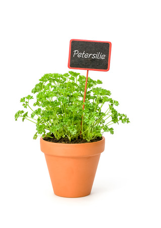 Parsley in a clay pot with a german label Petersilie