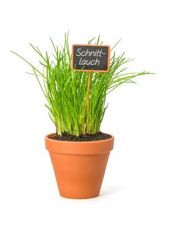 Chives in a clay pot with a german label Schnittlauch