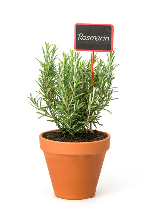 Rosemary in a clay pot with a german label Rosmarin