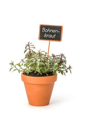 Savory in a clay pot with a german label Bohnenkraut