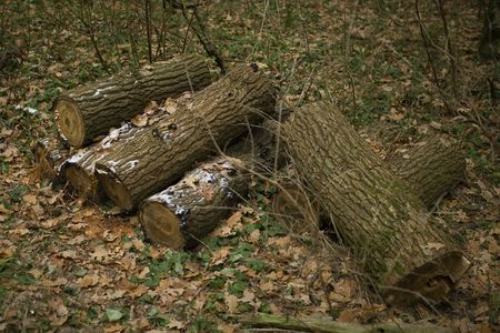 heap snow: A pile of frosty logs in autumn forest Stock Photo