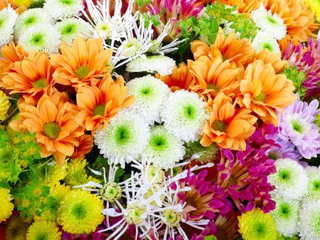 Multicolor background made of different flowers photo