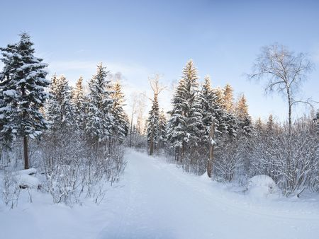Winter landscape panorama - forest and snow photo