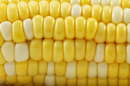 Macro close up of ripened sweet yellow and white corn kernals