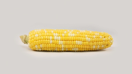 Single whole yellow and white ripe corn on the cob without husk Stock Photo
