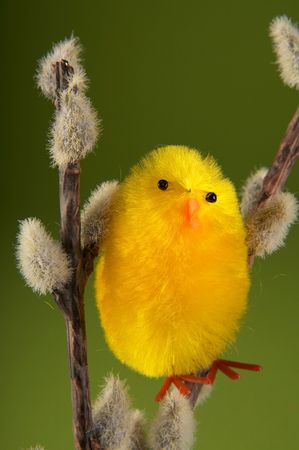 Easter bird on green bacground photo