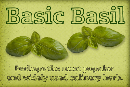 Fresh basil  with text