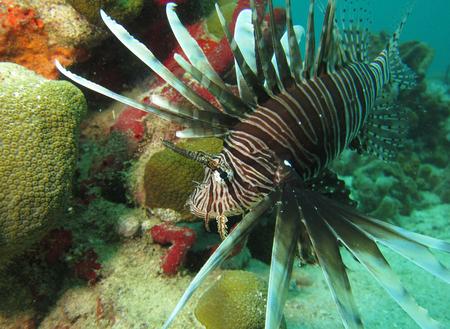 plonger sous les marins caraibes