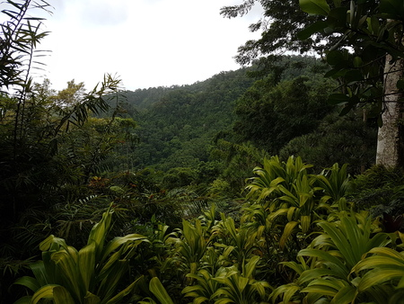 lush Martinic forest
