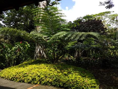 lush caribbean garden