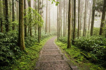 Xitou Naturbildungsgebiet in der Gemeinde Lugu in Nantou, Taiwan. Das Dorf Xitou beherbergt reichlich natürliche Ressourcen. Xitou hat viel Regen und ist das ganze Jahr über kühl und feucht.