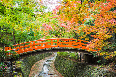 Every year on November to mid December, Kitano Tenmangu will open its garden to the public during the peak of the autumn leaf season.