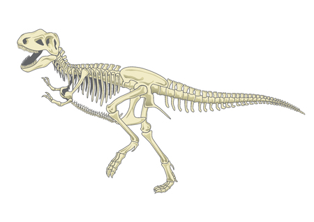 illustration of tyrannosaurus T rex skeleton Ilustração