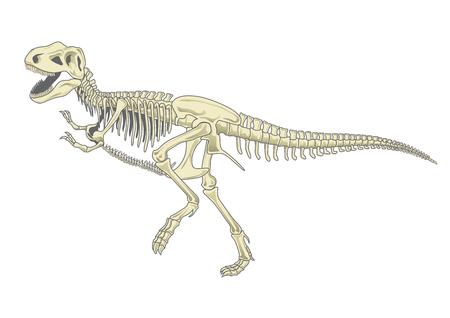 Ilustración del esqueleto de tiranosaurio T rex
