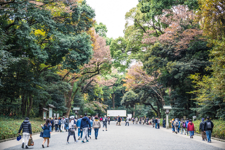 Tokyo, Japan - December 2, 2018: Meiji JIngu shrine is covered by a huge forest that consists of 120,000 trees, which were donated by people from all parts of Japan when the shrine was establish. Redakční