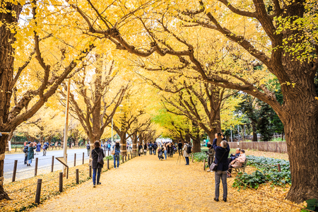 Tokyo, Japan - December 2, 2018: Meiji Jingu Gaien is the most popular spot for autumn leaves viewing in the central area of Tokyo, which is famous for the avenue lined with Ginkgo trees. Redakční