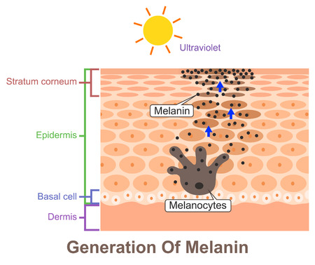 Generation Of Melanin