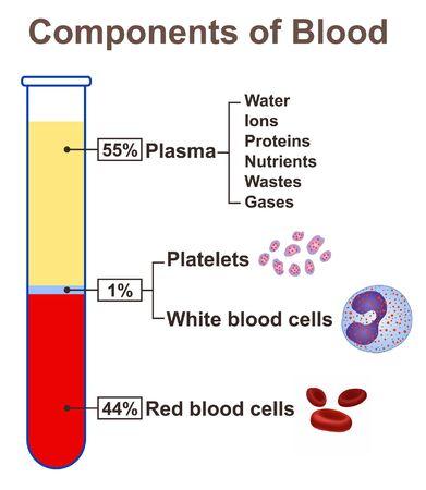 Bestandteile von Blut