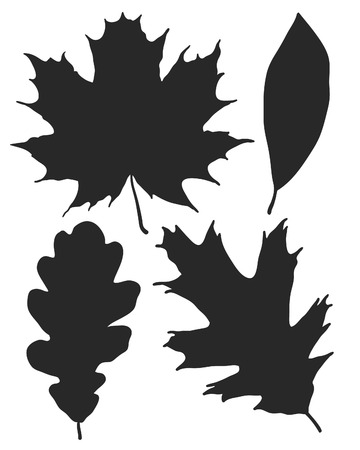 black and white leaf: Detailed leaf silhouettes including oak and maple leaves